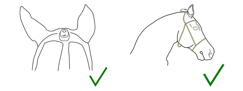 Schéma de positionnement du capteur cheval